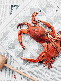 Carla Hall says: Crabs need to breathe, so keep them in a container with wet newspaper and some straw to retain the moisture, and make sure you keep the lid ajar. Get more tips for her epic Crab Boil!