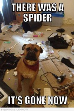 funny caption dog destroys house there was a spider it's gone now