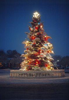 Lit Christmas tree on a snowy evening