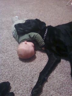 Lab and his baby!! Gotta love those black dogs....