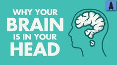 Why Your Brain Is In Your Head