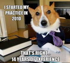 Lawyer dog.