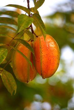 Starfruit ,costa rica