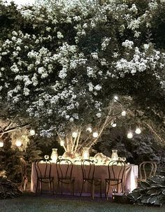 outdoor dining under the trees