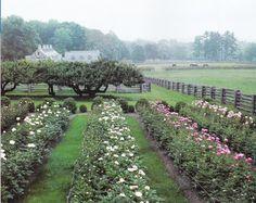 Martha Stewart's peony garden
