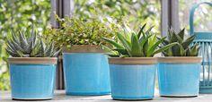 Haworthia et Muehlenbeckia Maori, des petites plantes apaisantes