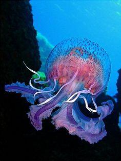 Jellyfish #oceanlife