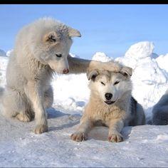 anim behav, furri friend, beauti anim, friends, funny dogs, frosti friend, anim big, ador dog, cubs