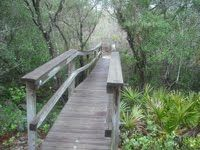 Information on trails and run-walk events in and around Pensacola, FL.