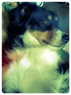 my #dog Kaylee tomorrow is #Monday...say it isn't so!!
