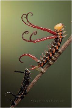 Caterpillars by Igor Siwanowicz