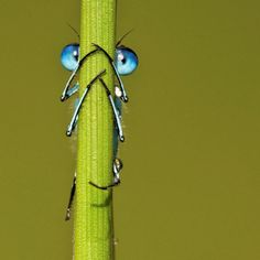 plant, animal pictures, big eyes, blue, cutest animals