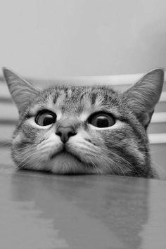 Whatcha doing ?