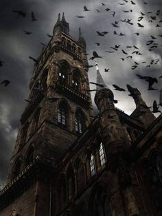 the raven, halloween night, castl, haunted houses, glasgow, crow, bat, place, ravens
