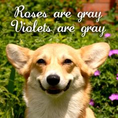 It's All Gray. #funny #funnydogs #lol #laugh #dogmeme #dog