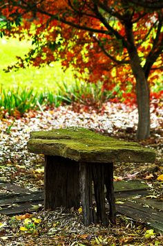 old mossy stone bench