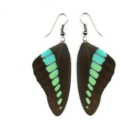 "Real Butterfly Wing Earrings ""Graphium sarpedon forewing"" Free... ($13) ❤ liked on Polyvore"