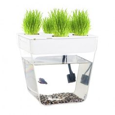 Aqua Farm: An easy and faster way to get into aquaponic gardening.