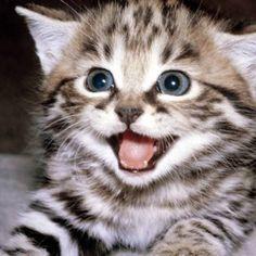 Why do cats like cat nip?