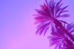 Sleep under a palm tree