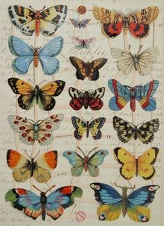 Free butterfly downloads to use!