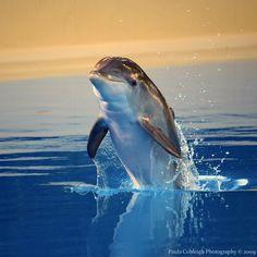 Baby Dolphin by La-V