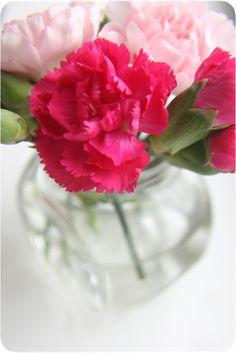 Love carnations