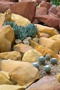 Desert scene rock and cactus garden.