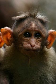 What big ears you have!!