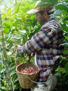 Valasquez Family Coffee is great as a holiday gift! Carefully grown on our family's small farms in the mountains of Honduras.Shade-grown,Fair Trade  tasting! Delivered free each month to your door throughout the Twin Cities by Guillermo Velasquez and family of Saint Paul.Our coffee is available in a variety of roasts, whole bean & ground.Visit our website for details & for our 2012 holiday flavors.3month coffee gift subscription availabe $27. 12months for $108. MN www.vfamilycoffee.com