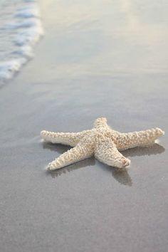 I love starfish!