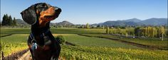 Weener's Leap winery