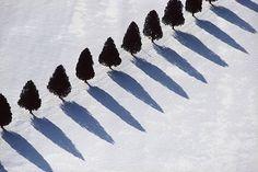 tree shadows in snow - middlebury, vt
