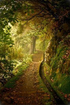 Lush pathway.