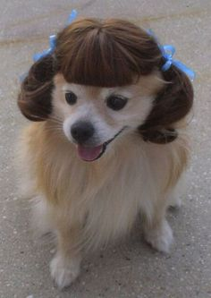 Silly dog, pigtails are for humans!