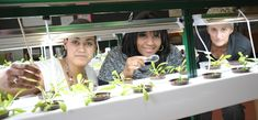 Hydroponic Greenhouse Lab Opens at PS 208 in Harlem