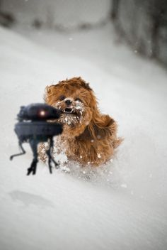 Chewbacca Puppy