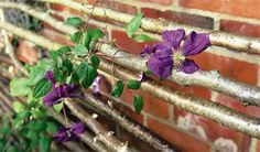 How to make a rustic trellis - Projects: Creative projects - gardenersworld.com