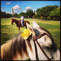 Yes, we're in Texas. But that doesn't mean there are... Well, okay, maybe just today. // #Baylor Riding Association on Fountain Mall, via bayloruniversity on Instagram #SicEm