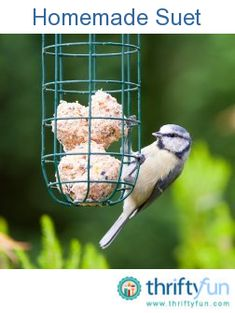 this is a guide about making homemade suet. you can