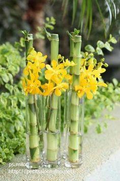 lucky bamboo & orchid, lucky bamboo, lucky, bamboo, green lucky bamboo