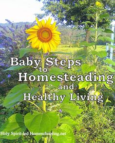 baby steps to homesteading
