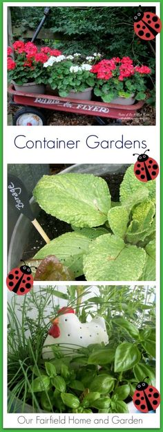 Container Garden Ideas! http://ourfairfieldhomeandgarden.com/container-gardens-our-fairfield-home-garden/