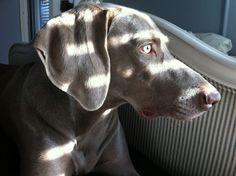 Beautiful Jasper