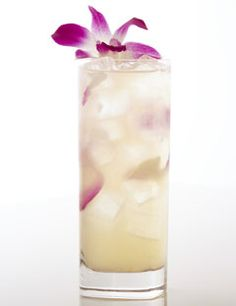 G'Vine Orchid: 1 1/2 oz. G'vine Gin, 1/2 oz. elderflower syrup, 1 1/2 oz. fresh pink grapefruit juice, 1 1/2 oz. brut Champagne, 1 orchid. Put pink grapefruit juice, elderflower syrup, G'vine in a shaker; add ice, shake, serve in a highball glass. Before pouring the drink into the highball glass, add the Champagne so that it mixes with the rest of the ingredients. You can replace the elderflower syrup with simple syrup. Garnish with an orchid.