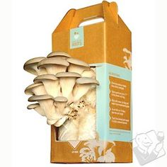 Back to the Roots Oyster Mushroom Kit at Wine Enthusiast - $24.95