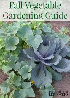 Fall Vegetable Gardening Guide - a list of vegetables to grow in your garden this fall and fall gardening tips.