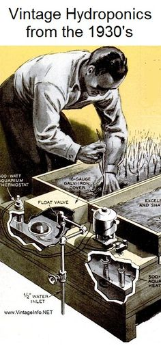 "Hydroponics in the 1930's, known as ""Tank Farming"" back then. Click for complete instructions."