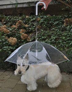 A dogbrella! haha.