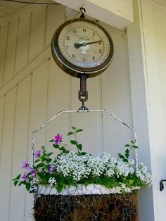 Antique Scale Hanging Planter - love this creative micro garden idea. Chicken wire has been moulded into a 'basket', lined with moss and planted into with spring flowers then hung as a feature on the verandah.   The Micro Garden